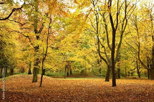 Fotobehang Meloen Park at Kolobrzeg. West Pomeranian Voivodeship. Poland