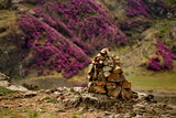 Russia. Mountain Altai. Chuyskiy tract in the period of the flowering of Maralnik (Rhododendron). - 213378758