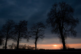 Silhouettes of Trees at Sunset - 213418169