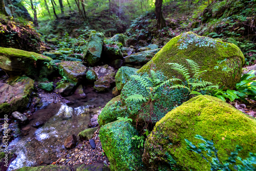 Moss covered rocks and small stream in forest - 213419580