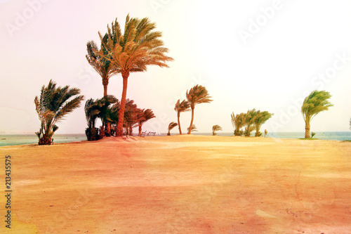 Photo of a beautiful retro background of a palm tree - 213435575