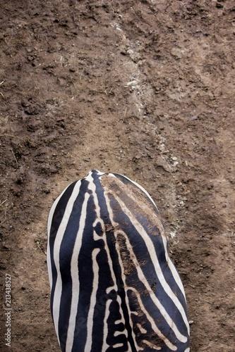 Fototapeta Zebra's back
