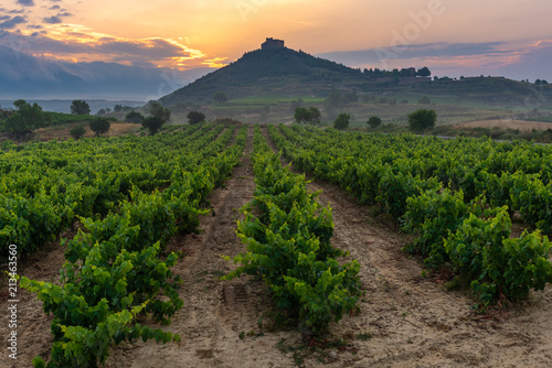 Fotobehang Wijngaard Vineyard with Davalillo castle as background, La Rioja, Spain