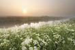 misty summer sunrise over river