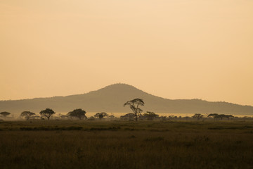 Evening in Serengeti savannah