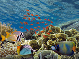 Tropical fish and Hard corals in the Red Sea - 213472793