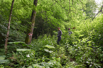 People hiking into the forest