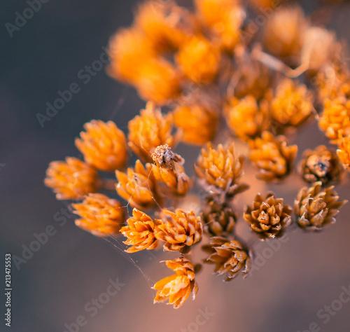 Nature beauty - 213475553