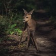 Roe fawn in forest