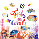 watercolor drawings of bright fish and corals - 213479195