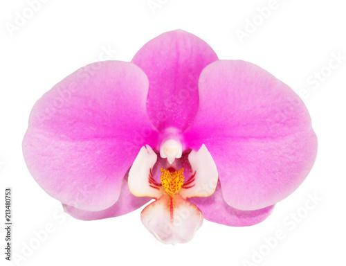Fototapeta Orchird Flower Isolated on White