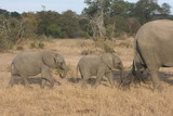 Baby elephants in the Kruger National Park