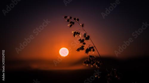 Foto Murales Sunrise