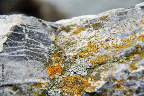 The vegetation on the rocks - 213524769