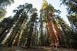 Quadro Sunset in Sequoia national park in California, USA