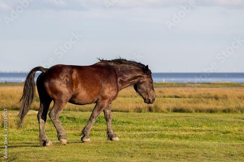 Fotobehang Noordzee Pferd in den Salzwiesen am Wattenmeer auf der ostfriesischen Nordseeinsel Juist in Deutschland, Europa.