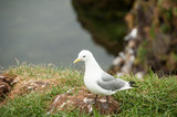 Seagull in a relaxing moment - 213545577