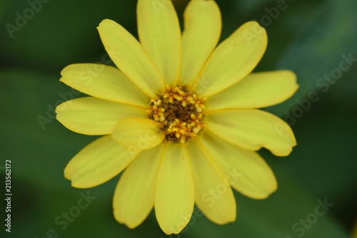 Foto Murales マクロの花の世界