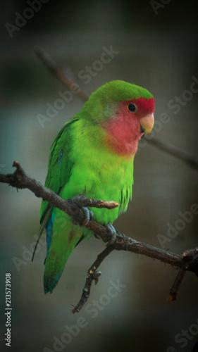 Fotobehang Papegaai Bird