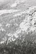 Winter mountain forest snowy landscape. Navacerrada, Spain