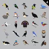 Various Birds Cartoon Vector Illustration 4 - 213589394