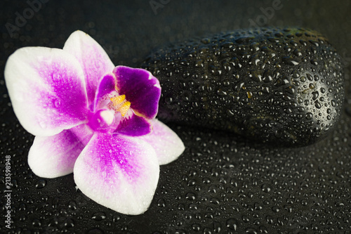 Fototapeta Pink orchid with black stone and water drops on black background