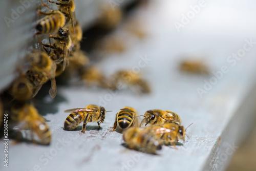 In de dag Bee bees on the platform
