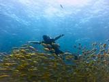underwater - 213606314