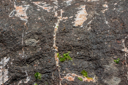Aluminium Stenen The surface of an old rock with cracks. Old rock texture (wild background).