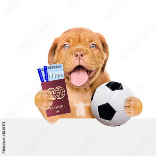 Funny puppy holding a soccer ball, passport and tickets above white banner. Isolated on white background - 213615373