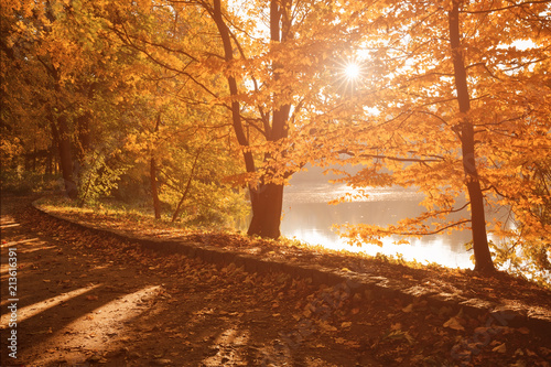 Foto Murales Sun shines through yellow leaves of trees on the path around the lake in city park, beautiful fall season landscape