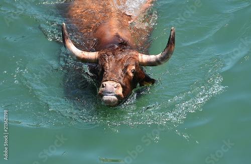 Fotobehang Bison toro en el agua