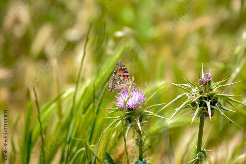 Butterfly macro closeup - 213630104