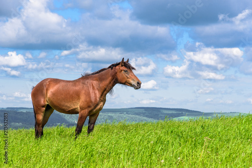 The horse is standing in the field