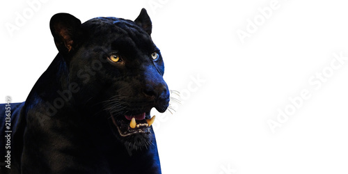 Plexiglas Panter Panther with on a white background space for font