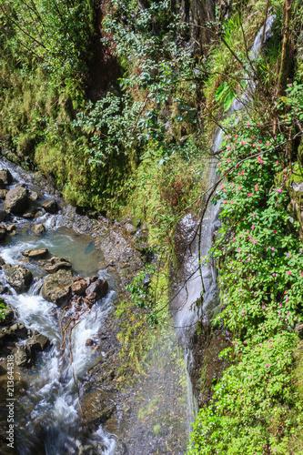 Scenic Rainforest Stream on Maui