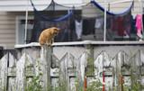 chat sur une clôture  - 213645906