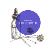 Hand drawn set of essential oils. Vector cornflower flower. Medicinal herb with glass dropper bottle. Engraved art. Good for cosmetics, medicine, treating, aromatherapy, package design health care.