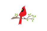 Cardinal Bird Logo Design Illustration