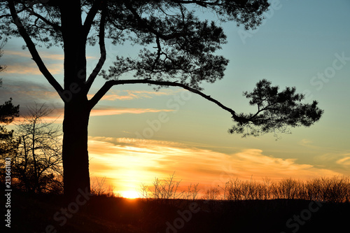 Leinwanddruck Bild Sonnenuntergang