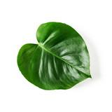 Monstera leaf - 213669567