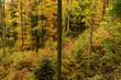 Leinwanddruck Bild - Herbstwald