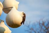 swallows - 213680916