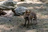 fox - 213683791