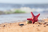 Summer beach in a tropical paradise with a  seashell and  starfish on golden sand. - 213687505