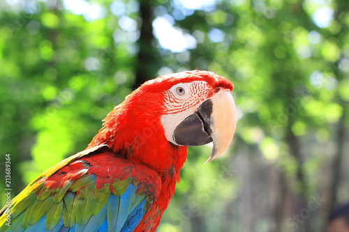 Leinwanddruck Bild close up. macaw parrot on blurred background of the jungle