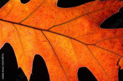 Close Look at the Beauty of a Colorful Autumn Leaf - 213708776