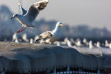 Seagulls on a Roof - 213728372