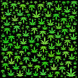 Cannabis, leafs, on black,  poster - 213745792
