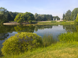 A picturesque pond with overgrown green banks in the city Park. Summer, Sunny morning. - 213764974